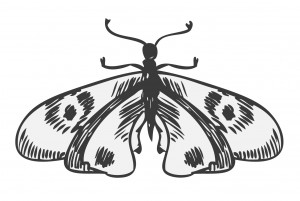 Moth Sketch