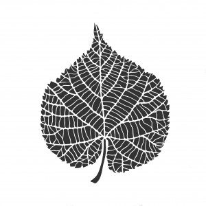 Petrified Leaf Sketch