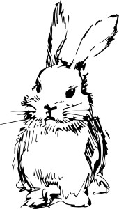 Rabbit sketch